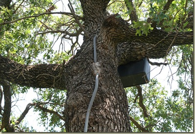 outdoor lighting answers by nightscenes protect your trees please