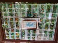 2014.05.10-061 liste des papillons