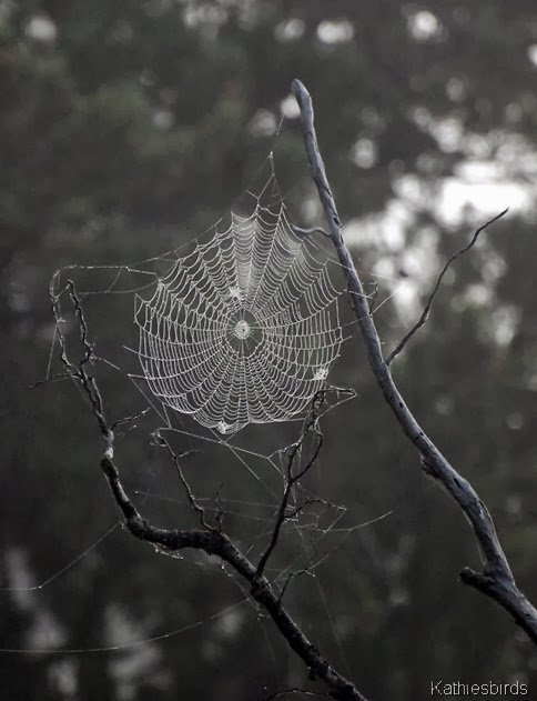 11. spider's web-kab