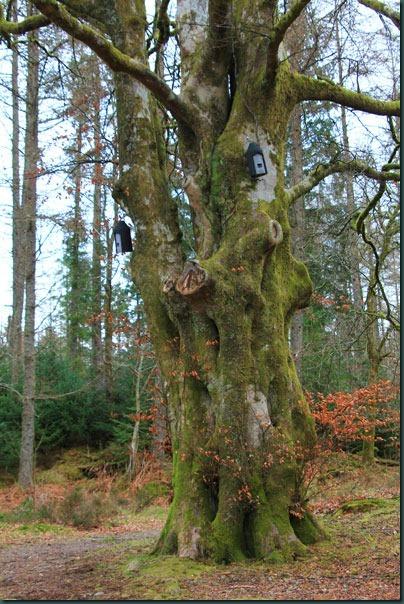 5-old-tree