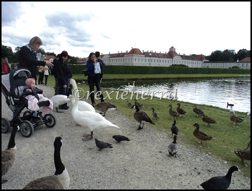 nymphenburg castle-swans and ducks
