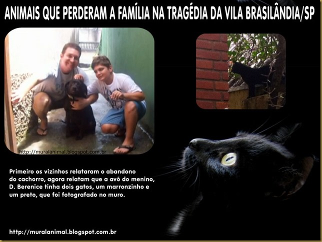 gato_brasilandia
