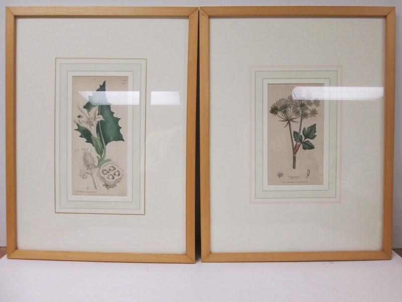 Botanical Print Pair 2