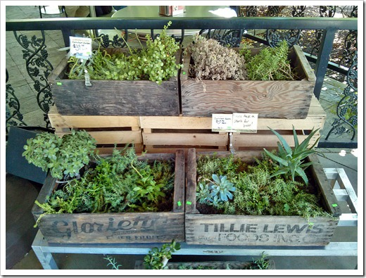 Succulent goodie boxes at Davis Food Coop
