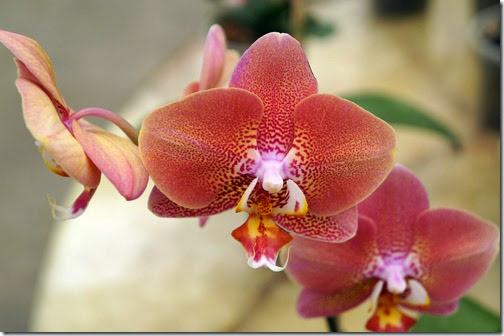Festival de Orquídeas em Teresópolis 16