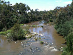 Jan 30- Yarra River, Templestowe
