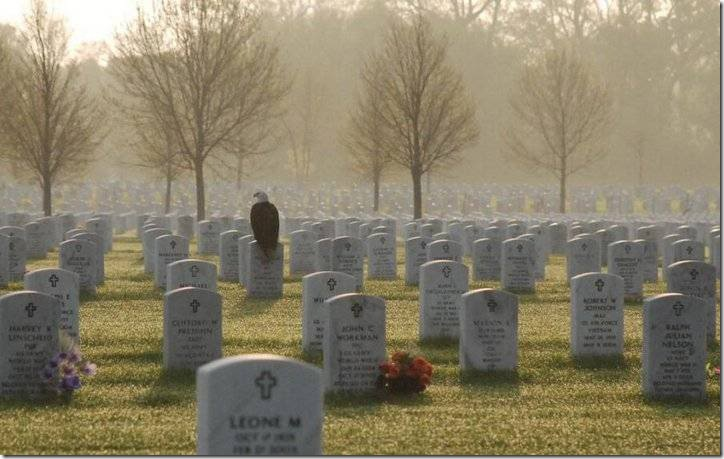 American Eagle in Cemetery