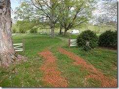4-24 10D Pemberton Oak