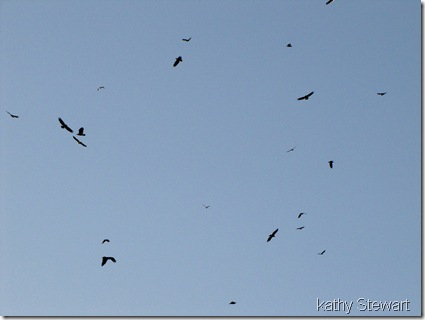 Overhead birds