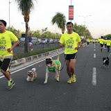 Pet Express Doggie Run 2012 Philippines. Jpg (63).JPG