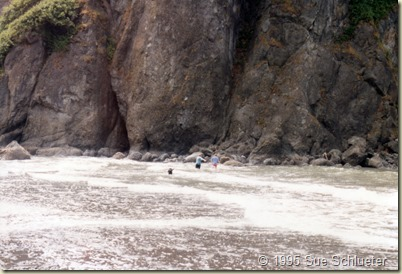 3 beach exploring oly nat park