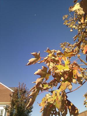 紅葉と快晴の青空と月