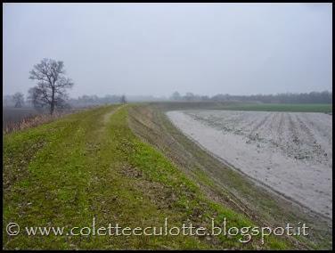Passeggiata sull'argine dopo la piena - Padulle - 11 gennaio 2014 (31)