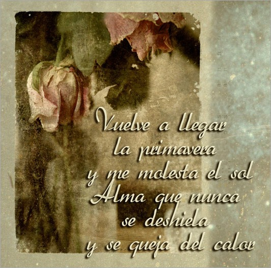 alma_que_nunca_se_deshiela