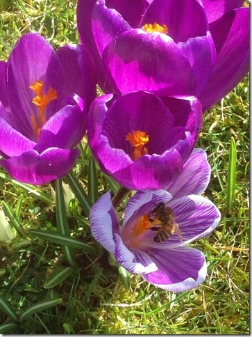 ipad images  10-03-2015 13-33-18
