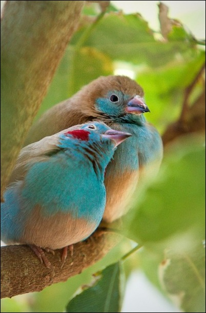 valentijnbirds