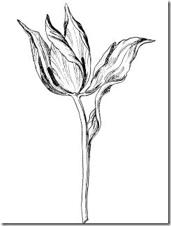 metamorphose016