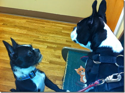 boys at the vet