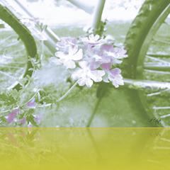 retro bike beside flowers