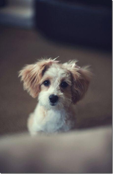 cute-puppies-awww-2
