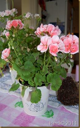 blomster september 2011 019