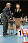 20130510-Bullmastiff-Worldcup-0949.jpg