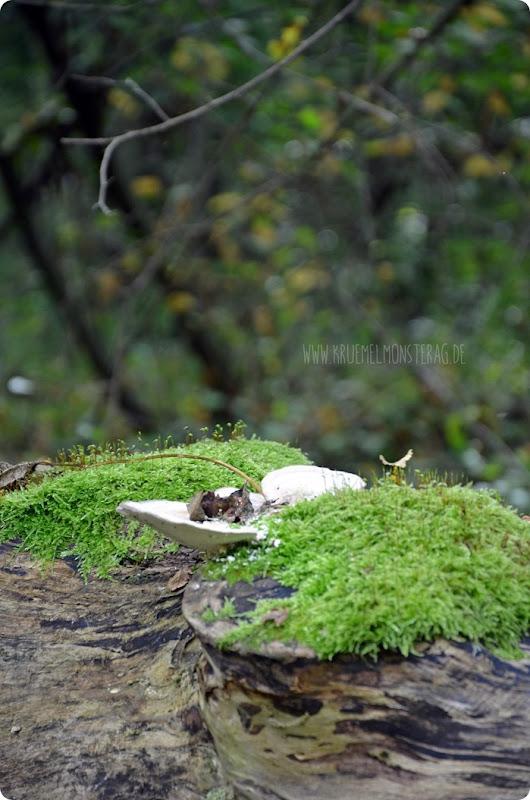 Herbstanfang (15) Wolfstour - am Wegesrand