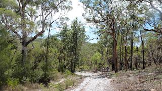 Wanderung auf Fraser Island von Kingfisher Bay zum Lake McKenzie.