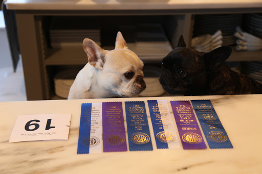 Wow, Franny!  Look at all of the ribbons G.K. won!  What a champion!