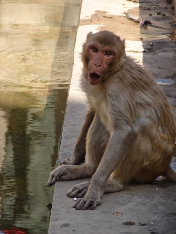 обезьяна рот.jpg