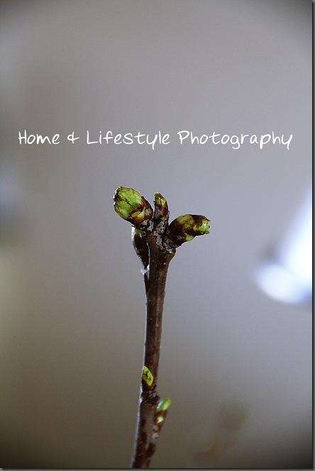 Home & Lifestyle