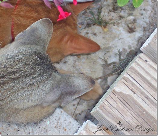 Cats_Lizard