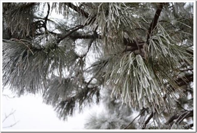 hoar frost white frozen dew