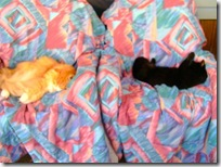 Orange-Blackie-18May10-1 (Small)