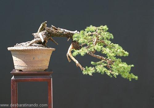 bonsais arvores em miniatura desbaratinando (28)
