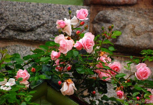 9. roses-kab
