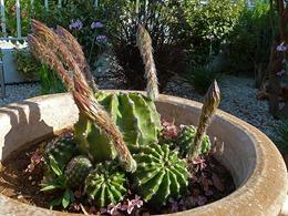 kaktus_02