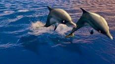 41 les dauphins