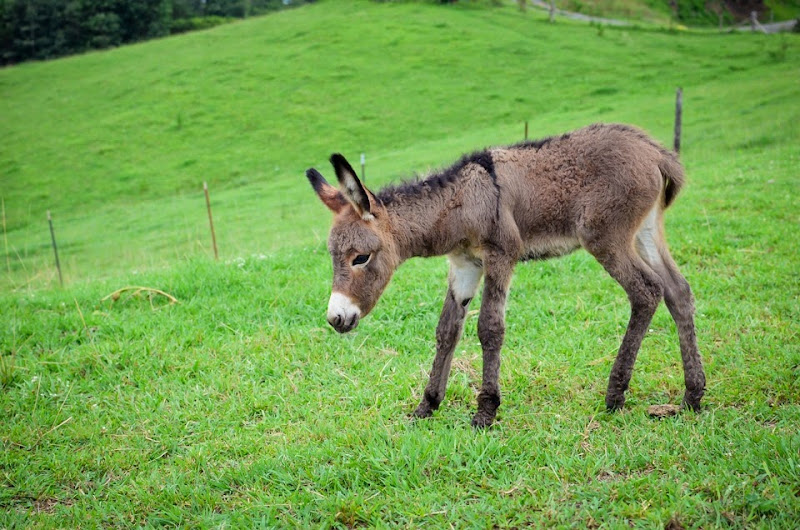 little donkey-12056
