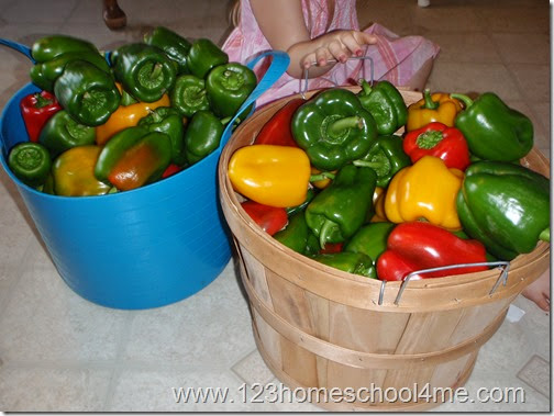 Harvesting 2 bushels of peppers from 9 pepper plants in kids garden