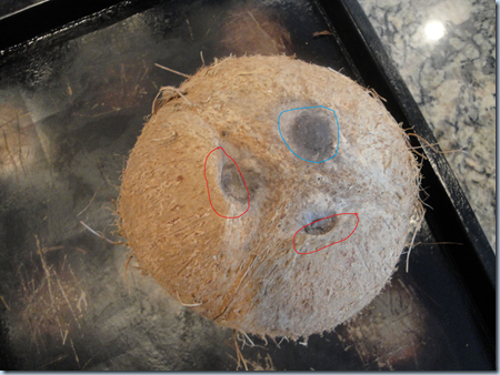 how to get coconut meat out of the shell