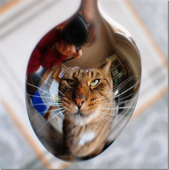 fotos animales divertidas patatitasylimones (33)