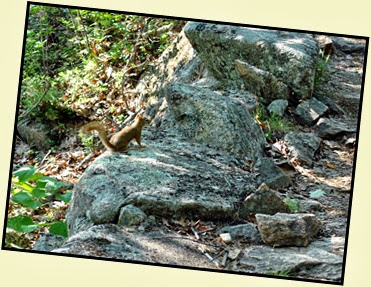 03d - Schiff Path - wildlife sighting - squirrel