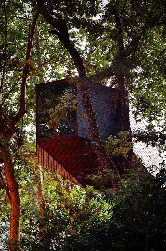 tree snake houses by luís and tiago rebelo de andrade 4