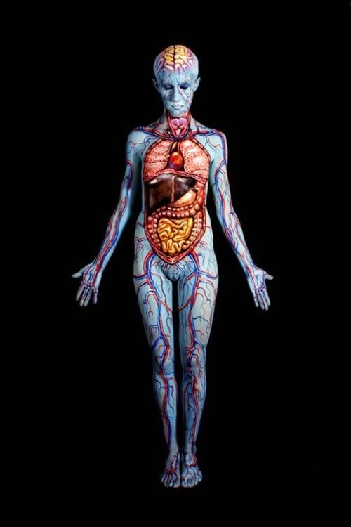 Arte corporal anatomia humana 02