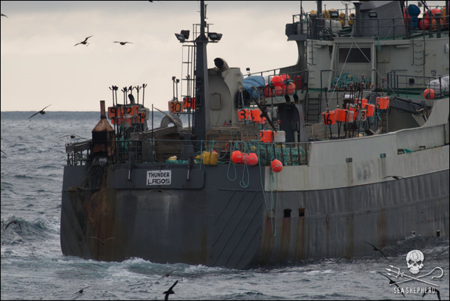 The Thunder is a CCAMLR black-listed vessel and has been issued with an Interpol Purple Notice. The Sea Shepherd ship Bob Barker located the Nigerian-flagged poacher Thunder on 16 December 2015 on the Banzare Bank off the coast of Antarctica. The poachers immediately dropped their nets and fled as the Bob Barker gave chase. Almost 50 days later, after a chase of over three thousand miles, Sea Shepherd continues to chase the Thunder in what is now historically the longest pursuit of a poacher on the high seas. The chase continues and is now taking place some 700 miles off the coast of South Africa. Photo: Sea Shepherd / Simon Ager