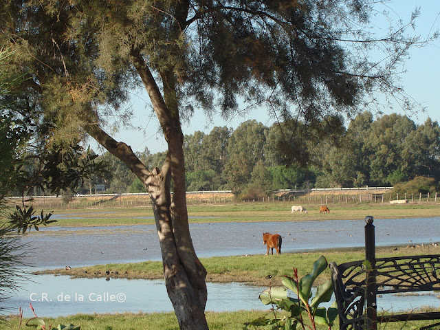 Marisma de Doñana. Rocio.jpg