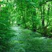 Munich en Bavière - Jardin anglais - Baignade dans le Eisbach