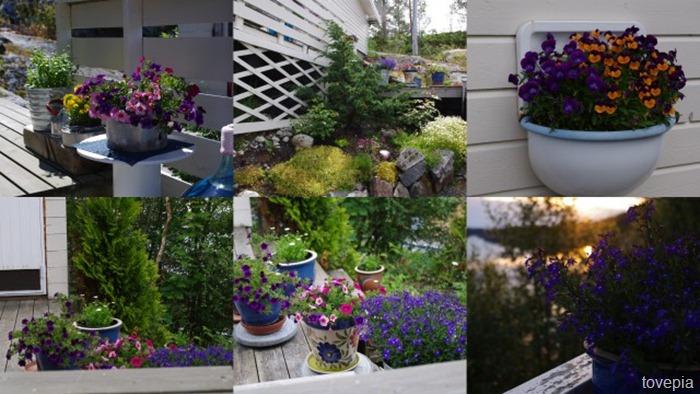 blomster på hytta 2012
