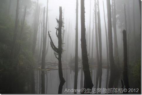 南投-忘憂森林Andrew